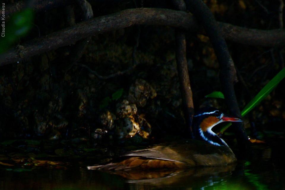 vg_pantanal2013_14