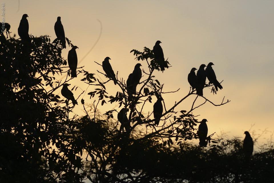 vg_pantanal2013_19