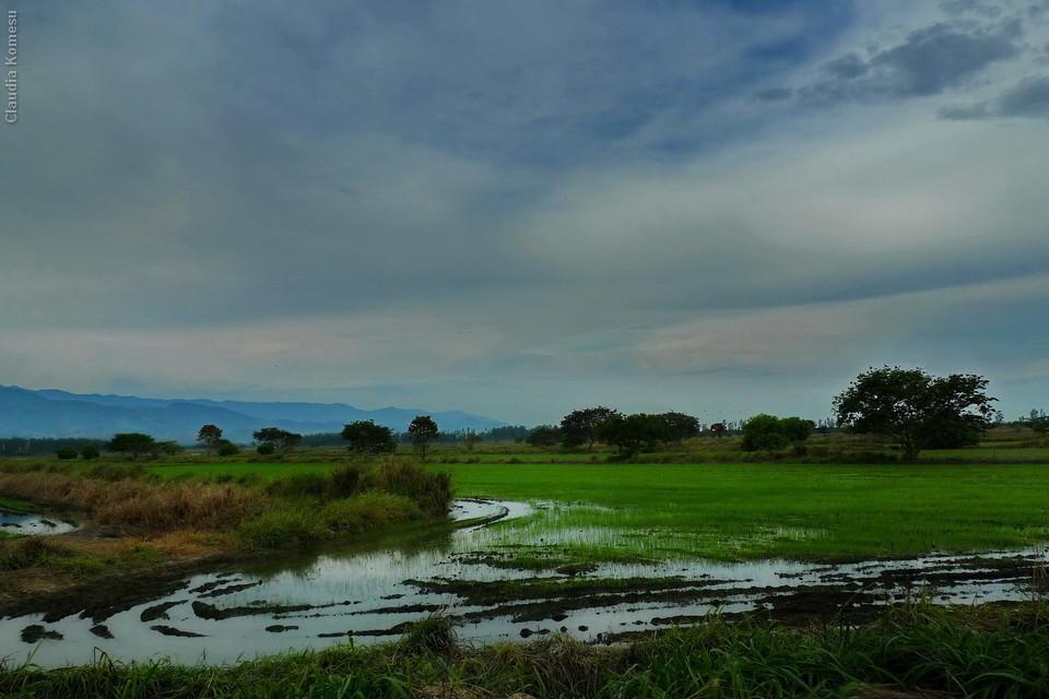 Os arrozais de Tremembé, no caminho para Campos do Jordão - SP