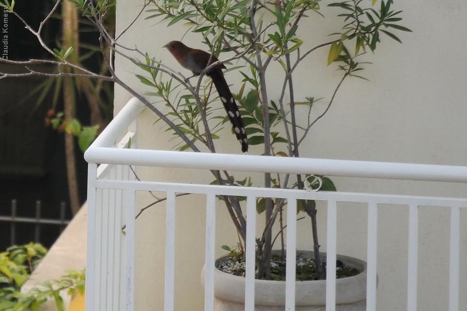 Olha a alma-de-gato no vaso da vizinha da frente