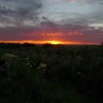Blog: O que você pensa sobre birdwatchers? Reflexões sobre o birdwatching, com a ajuda de Jonathan Franzen