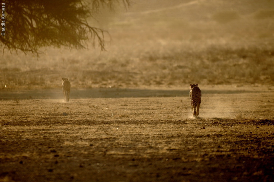 Kgalagadi - Twee Rivieren, 2011