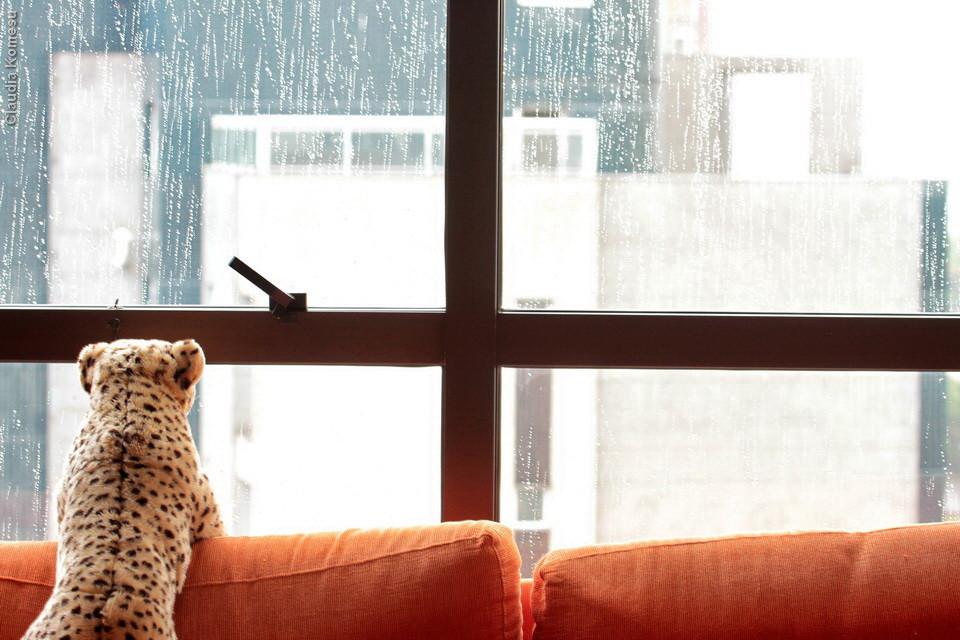Pop aproveitando a visão da chuva sem se molhar