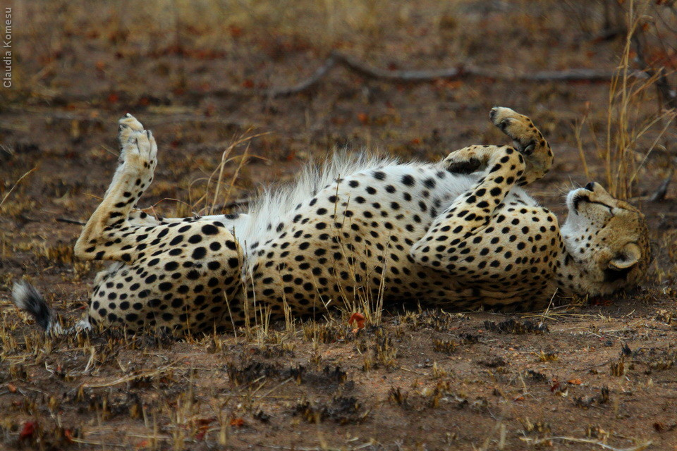 Kruger - Satara - Muzadzeni, 2010