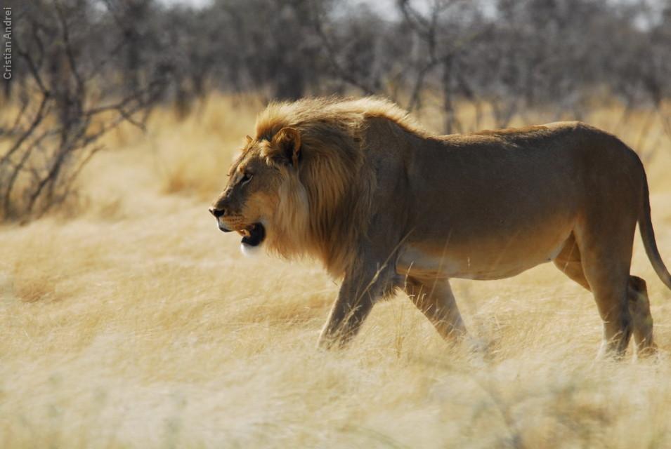 Etosha - Namíbia - 2006