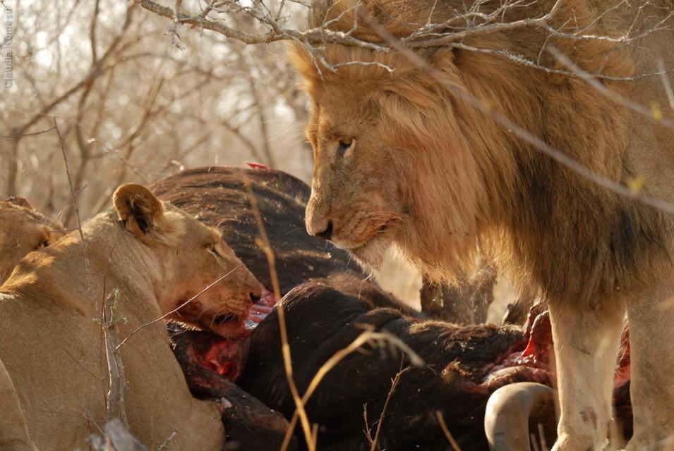 Kruger - 2008