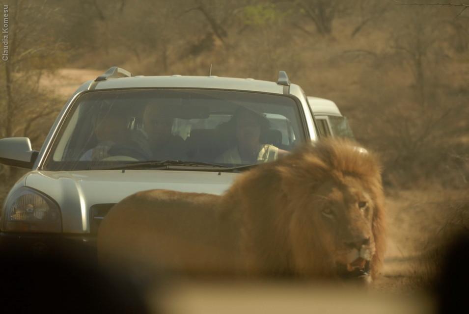 Kruger - 2008. Pelo vidro de trás do carro.