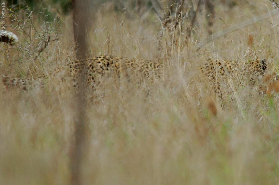 Kruger - 2007