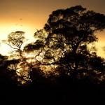Blog: Pequena seleção de citações relacionadas com as aves ou a natureza