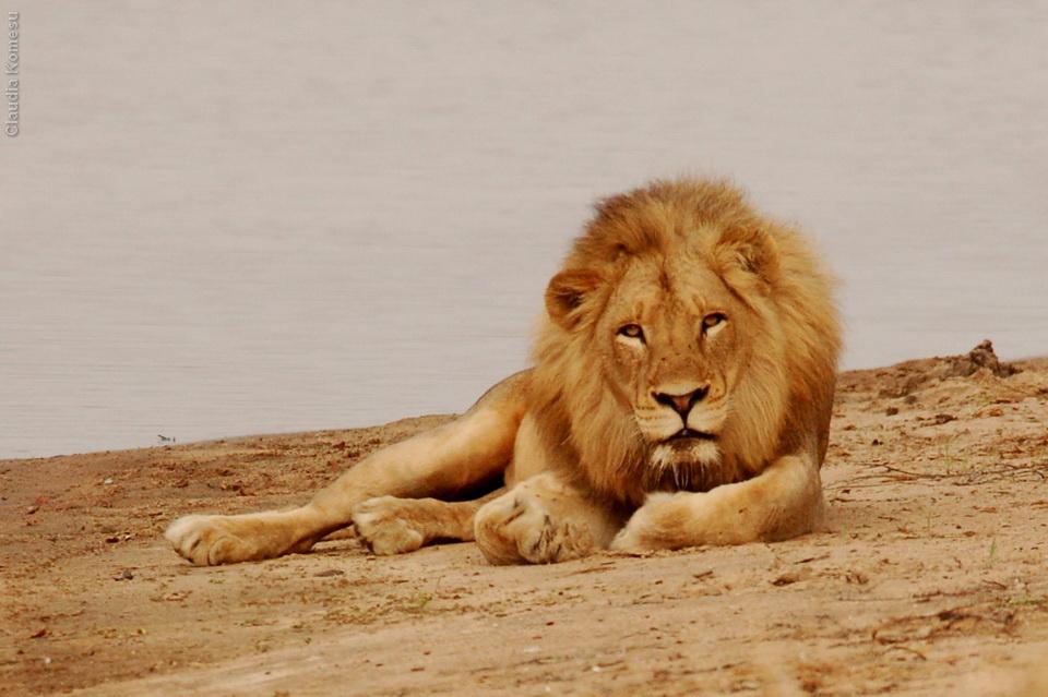 vg_africa06_60_Kruger