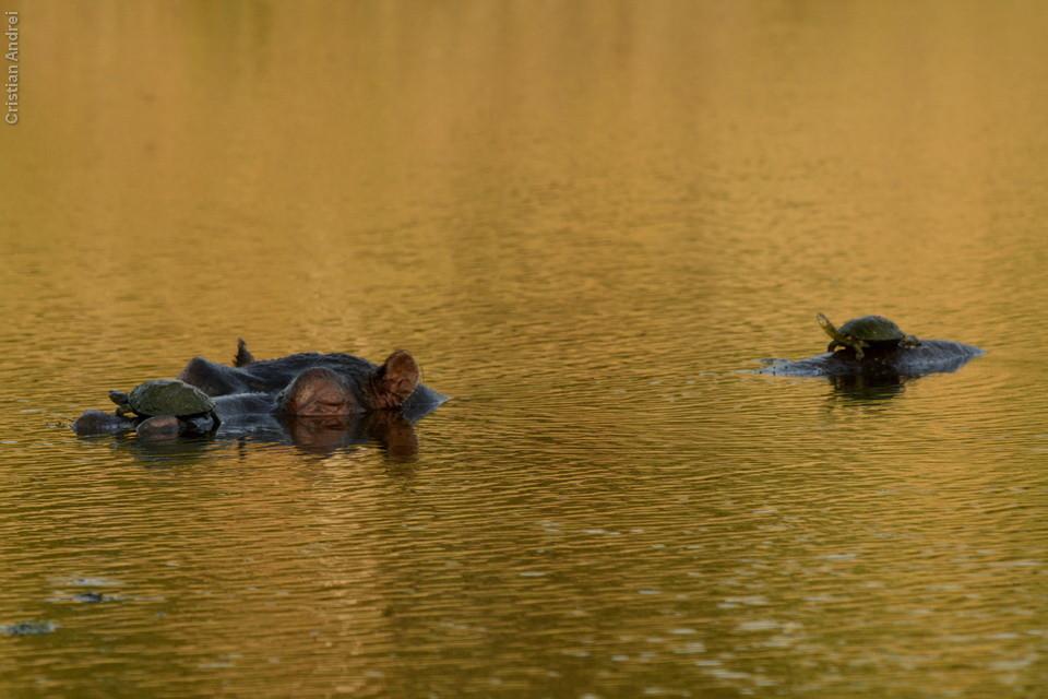 Cris conseguiu registrar das duas tartarugas