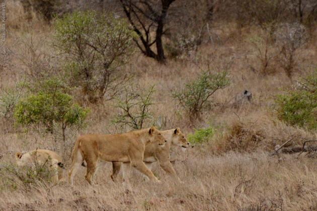 VG_Africa2013_42-b