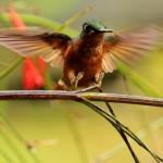 Passeio: Overdose ornitológica e de risos na Reserva Guainumbi, jan/13