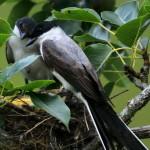 Blog: O que é uma boa foto de ave?