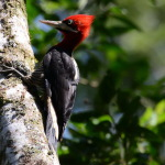 Passeio: Trilha dos Tucanos – Tapiraí – SP, maio/14