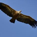 Espanha-birdwatching_00