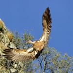 Espanha-birdwatching_01