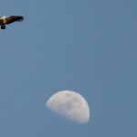 Espanha-birdwatching_02
