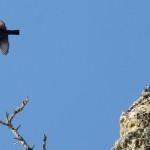 Espanha-birdwatching_03