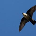 Espanha-birdwatching_05
