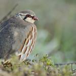 Espanha-birdwatching_09