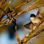 Espanha-birdwatching_10