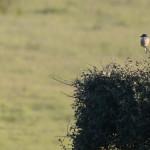 Espanha-birdwatching_11