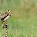 Espanha-birdwatching_12