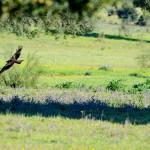 Espanha-birdwatching_14