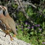 Espanha-birdwatching_15