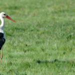 Espanha-birdwatching_16