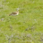 Espanha-birdwatching_17