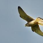 Espanha-birdwatching_18