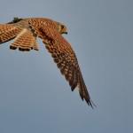 Espanha-birdwatching_19
