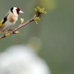 Espanha-birdwatching_23
