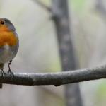Espanha-birdwatching_24