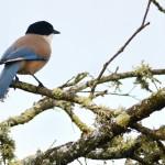 Espanha-birdwatching_28