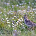 Espanha-birdwatching_30