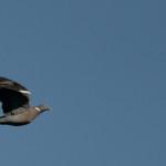 Espanha-birdwatching_37