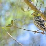 Espanha-birdwatching_41