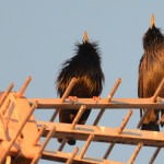 Espanha-birdwatching_44