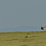 Espanha-birdwatching_48