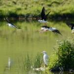 Espanha-birdwatching_49