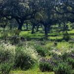 Espanha 2015: Extremadura, Sierra de Gredos, Fuente de Piedra, Vale do Jerte, abr/2015