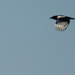Espanha-birdwatching_51