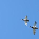 Espanha-birdwatching_52