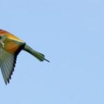 Espanha-birdwatching_53