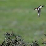 Espanha-birdwatching_54