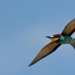 Espanha-birdwatching_58