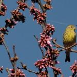 Espanha-birdwatching_61